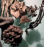 Detail of the Biodiversity Exhibit at AMNH