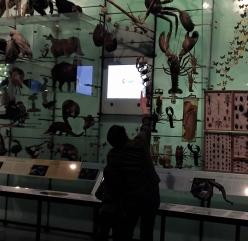 Biodiversity Hall, AMNH